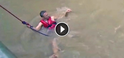 brave man save horses houston