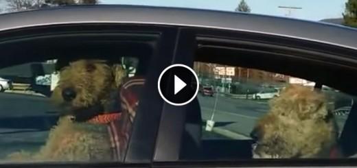 dog car horn