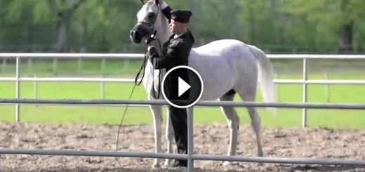 pepita perfect horse