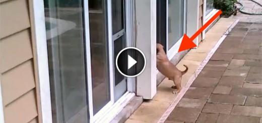 puppy dogs door