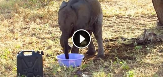 rangers elephant rescue