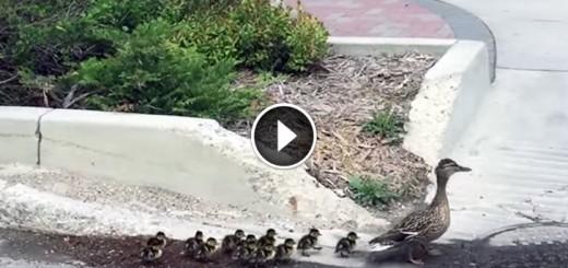 ducks police escort