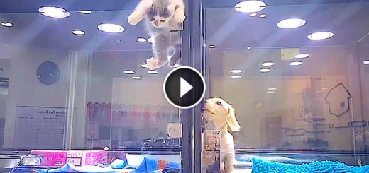 puppy kitten pet store