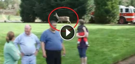 baby deear rescue
