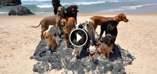 happy dogs pharrell