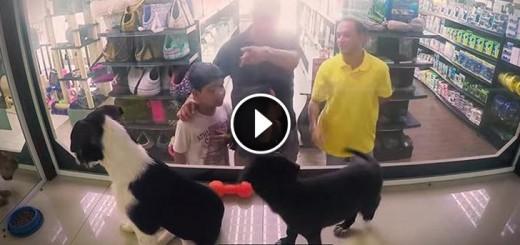 pet store rescues