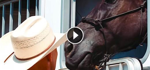 veteran meets horse