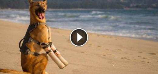 cola puppy prosthetics legs