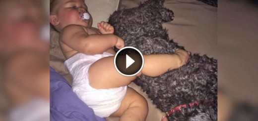 dog saves baby fire