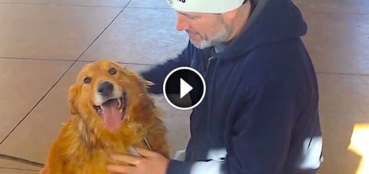 golden retriver reunite