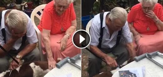 grandpa dog adopt