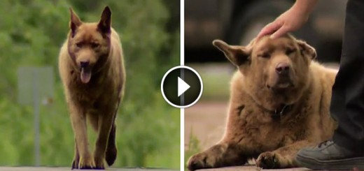dog story bruno