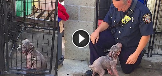 firefighter reunite puppy chunkie