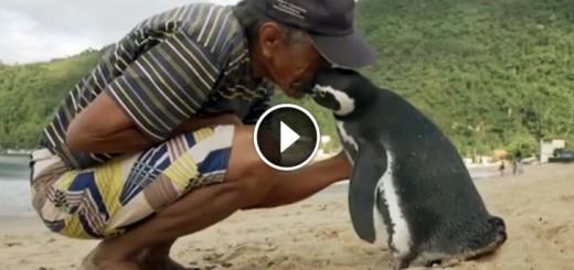 pinguin visit rescuer