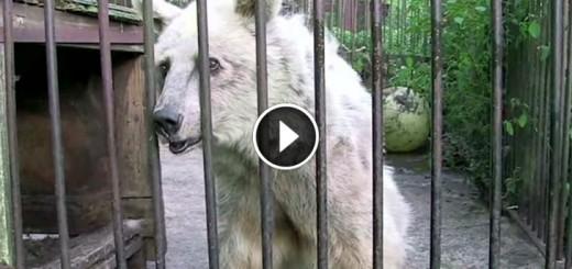 circus bear transformation