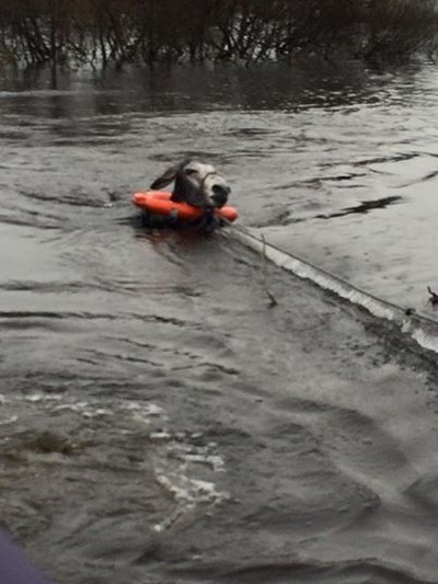 donkey flood rescued 2