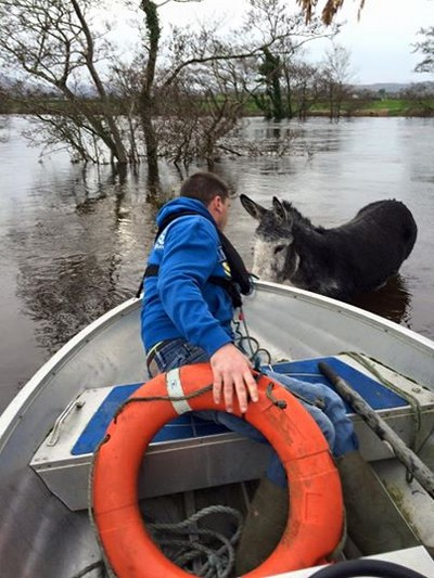 donkey flood rescued 3