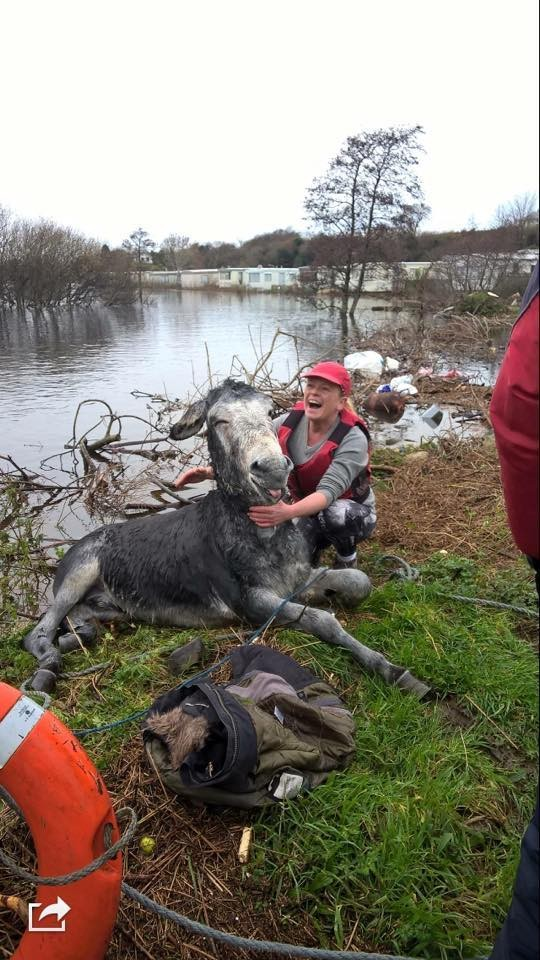 donkey flood rescued