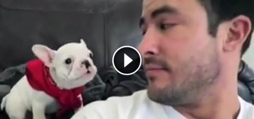 puppy bandana handsome