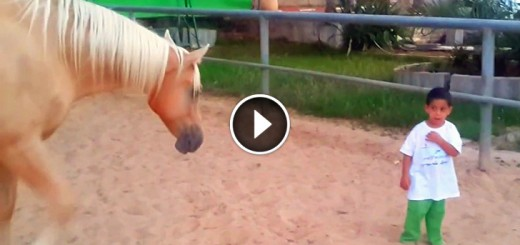 horse boy bond