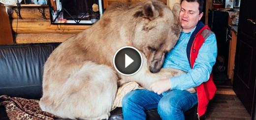 orphaned bear family