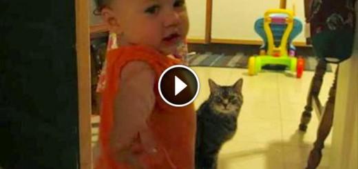 baby cat talk