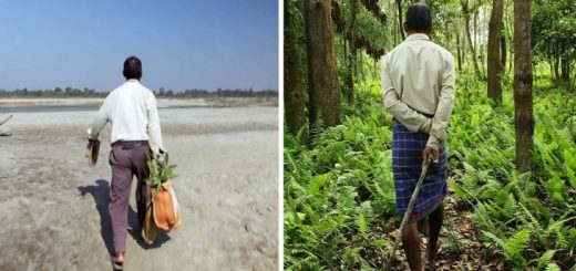 man plant trees