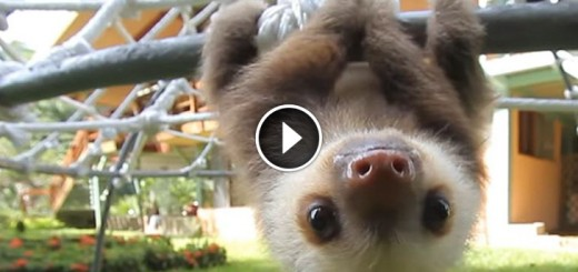 baby sloths conversation