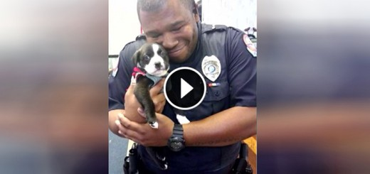 cop adopts rescue pup