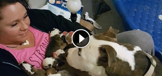 foster dog puppies
