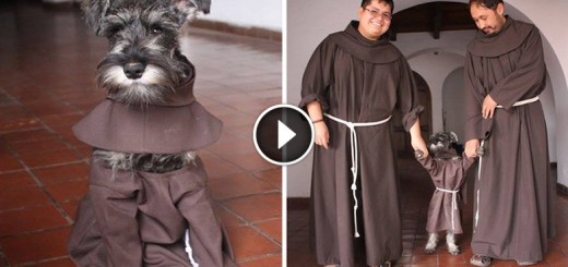 stray dog friar