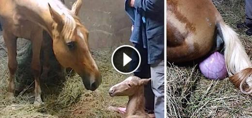 daisy horse twins